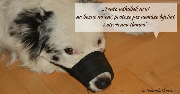 S tímto náhubkem pes nemůže dýchat s otevřenou tlamou.