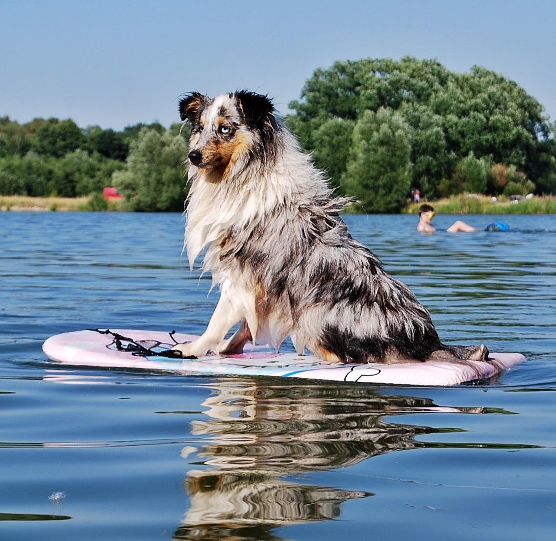 Vyberte si psa podle svého životního stylu. Tipy a rady od veterinářky. 2b31429f16