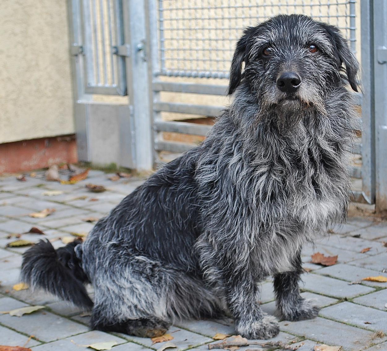 5f9f0f79baa Vyberte si psa podle svého životního stylu. Tipy a rady od veterinářky.