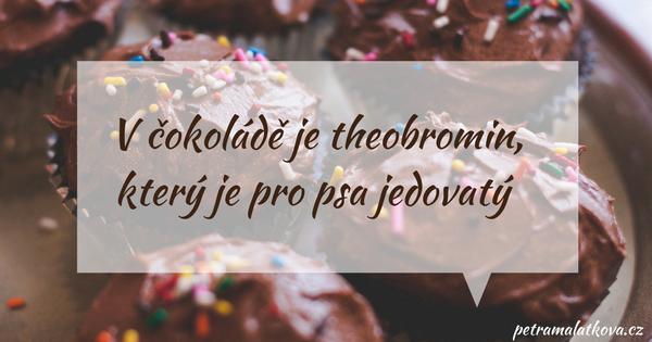V čokoládě je theobromin, který je pro psa jedovatý.